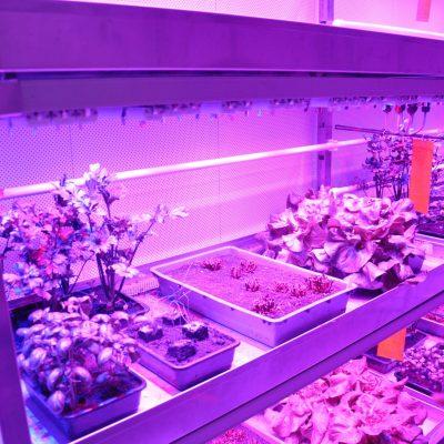 Innovatief voedsel verbouwen in Den Bosch. Foto: Pieter Verbeek.